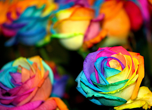 Color Splash Images Colorful Flowers Wallpaper And Background Photos