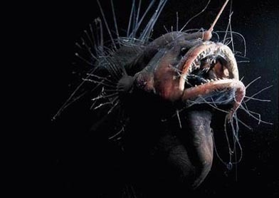 creepy deep sea.