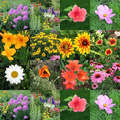 flower collage - spring photo