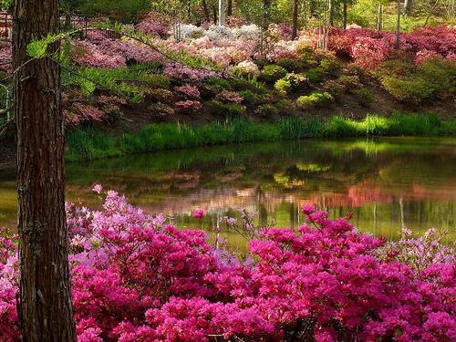 bunga garden