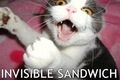 invisible... - lol-cats photo
