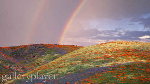 rainbows over a بستر of flowers