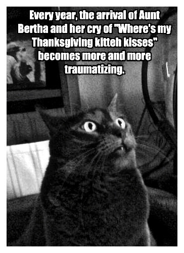 'WHERe's  my THAnksgiviNG KITTEh kisseS' :)) - cats Fan Art
