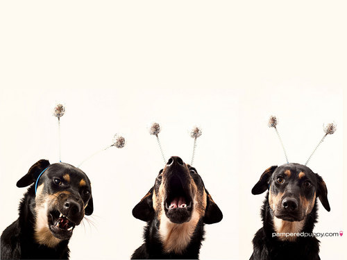 Dogs wallpaper titled Aliens attack!.