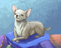 Chihuahua - chihuahuas fan art