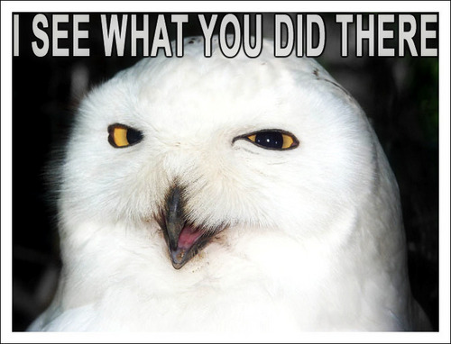 Owls fond d'écran titled I see what u did there:))