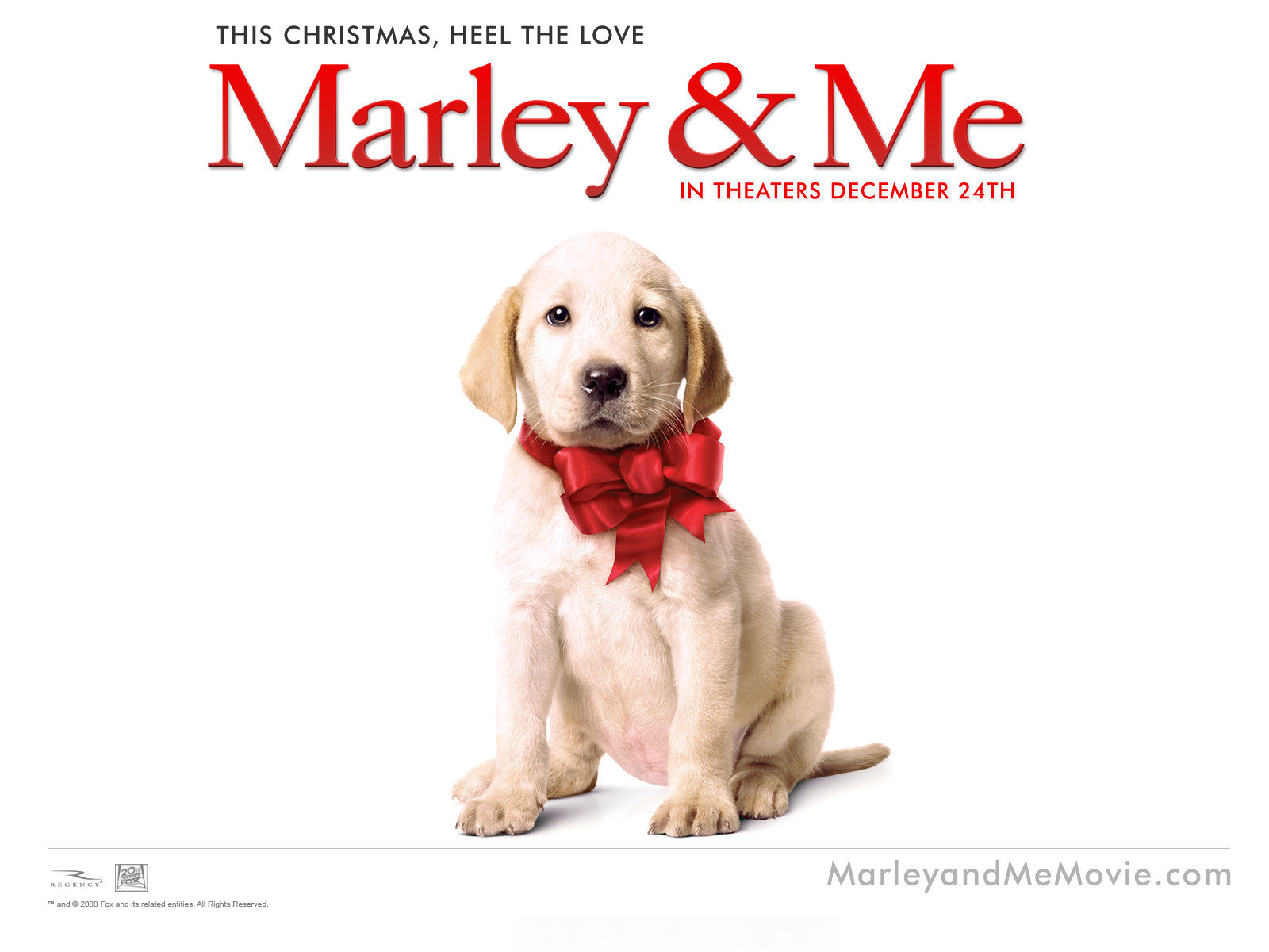 Marley And Me Dog Breed
