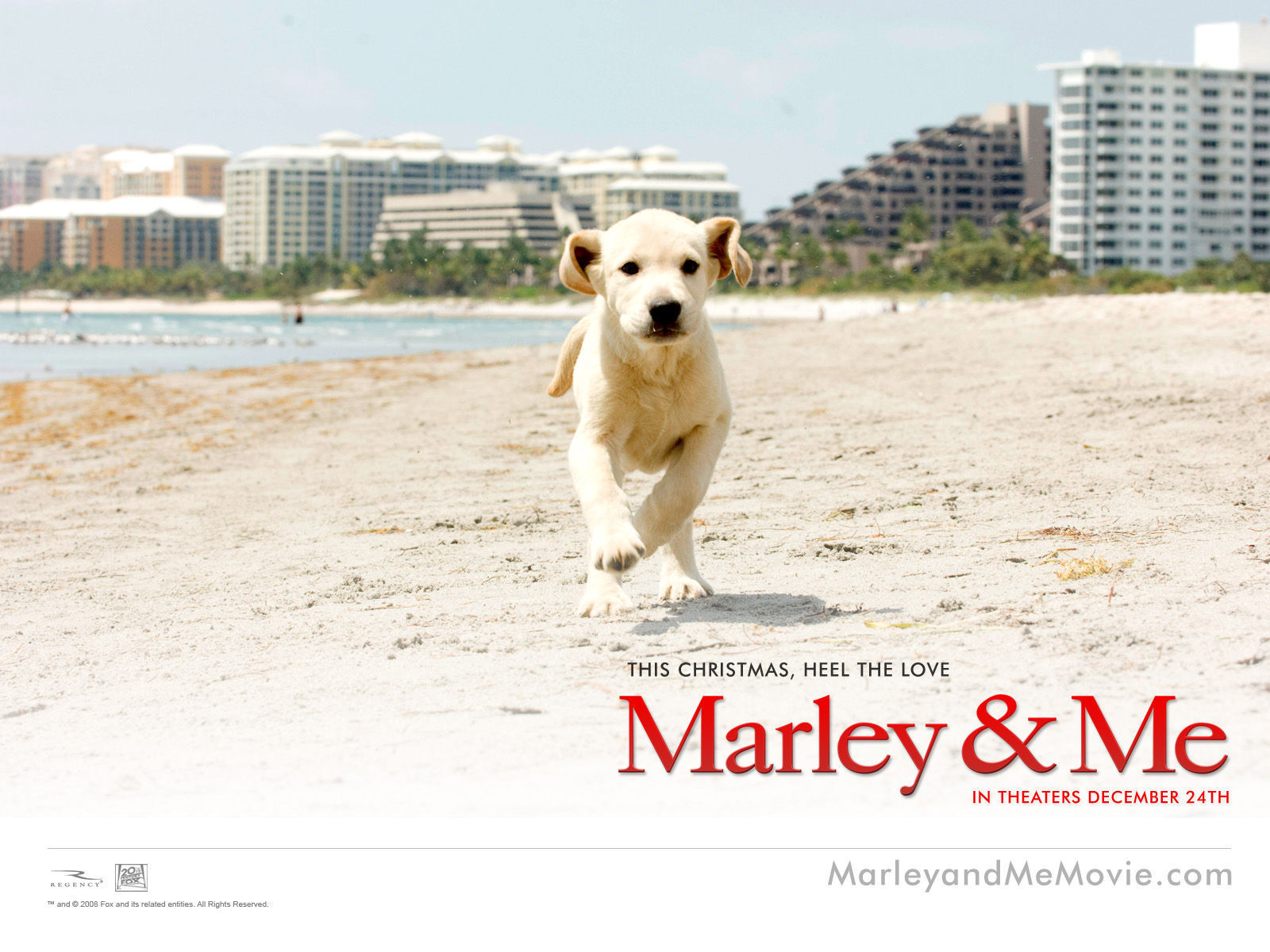 Marley And Me Dog Quot...