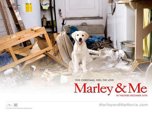 Marley & Me - marley-and-me Wallpaper