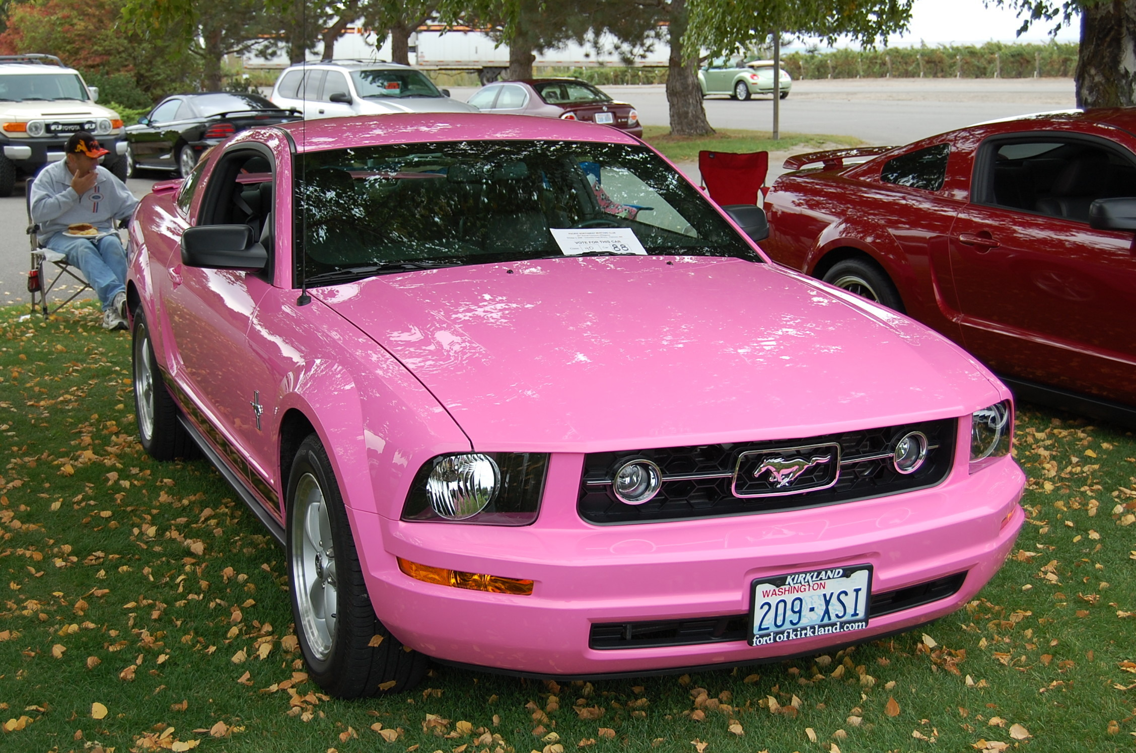 Pink mustangs images pink pony hd wallpaper and background photos