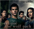 The pack - twilight-series photo