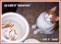YU CAllZ 'AQUAriUm' i callZ IT 'SOup' :))