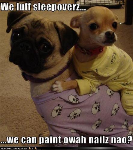 lol....dogs !