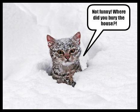 noT FUNNy!whERE DId u burY THE HOUse? :))