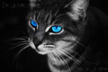 random cat - warrior-cats-of-the-clans photo