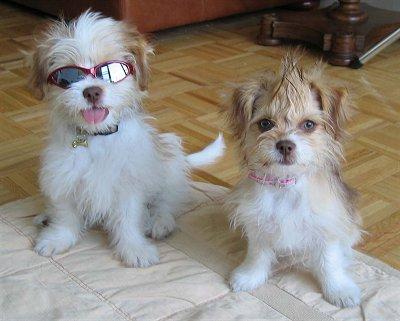 ♥ Hunde ♥