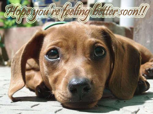 ♥ Get Better Soon Sweet Berni ♥