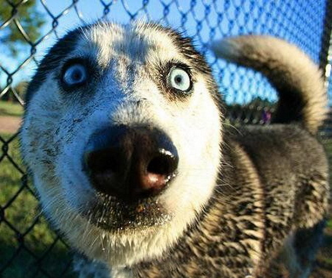 demented dogs - photo #18