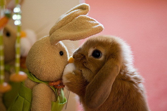 Bunny with stuffed animal version of itself.