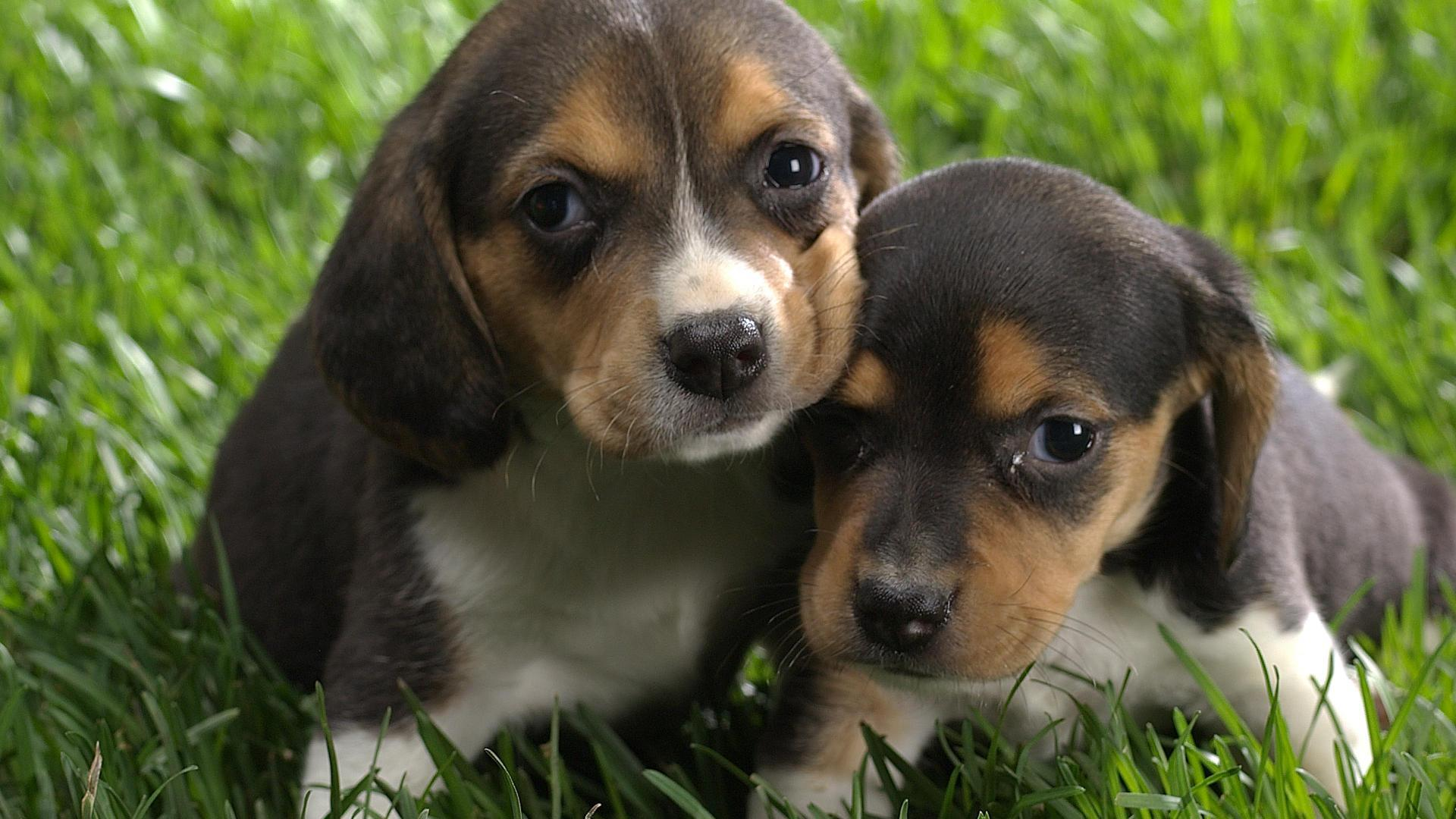 Dogs Images Cool Dogs Hd Wallpaper And Background Photos 13632556