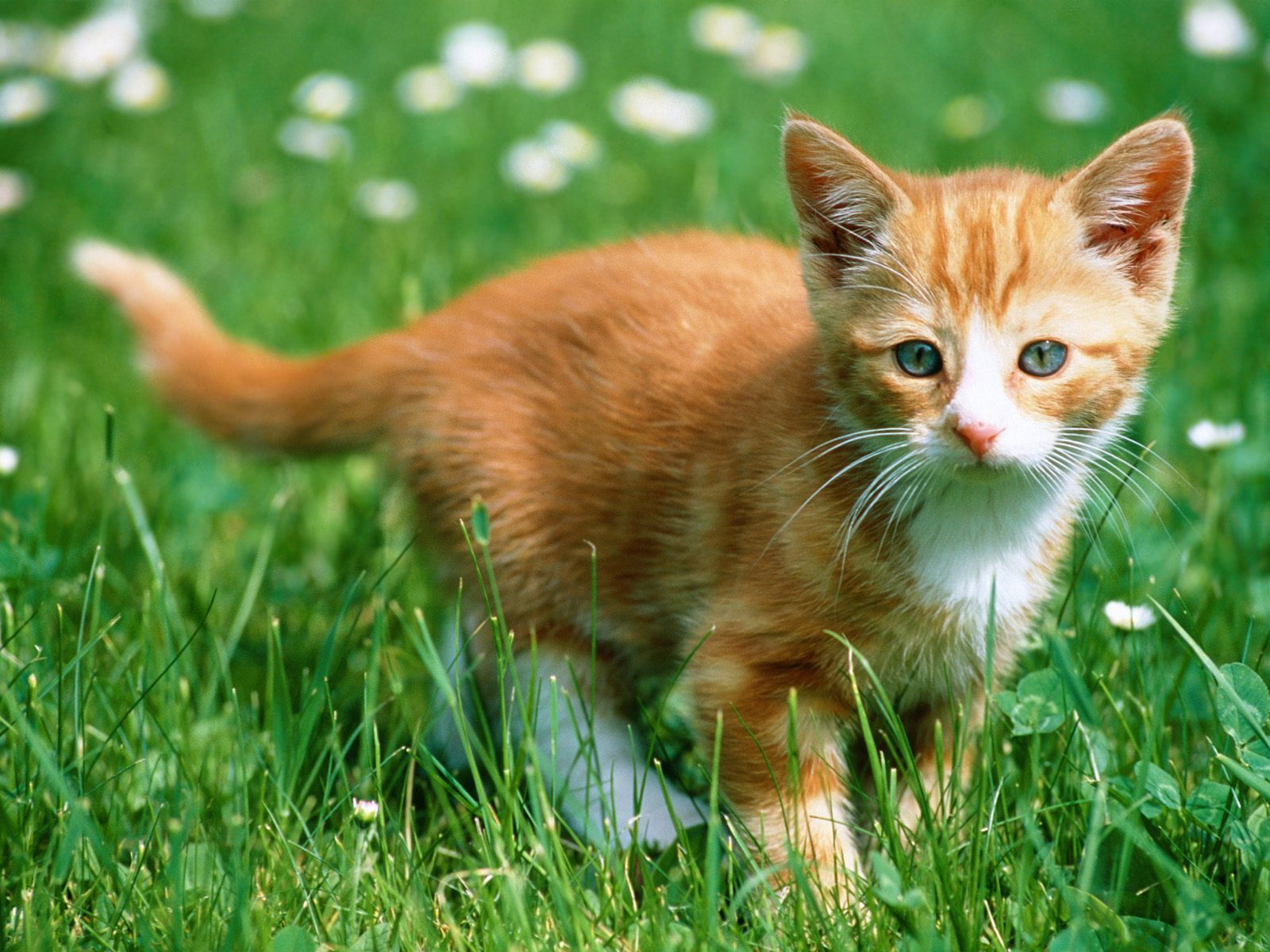 cats images cute cat hd wallpaper and background photos