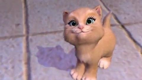 Cute kitten Miette