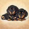 Dachshunds - dachshunds Icon