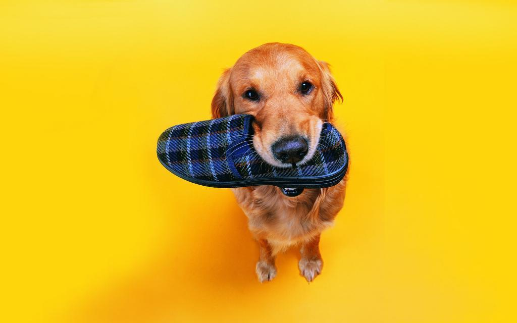 Dog wallpaper