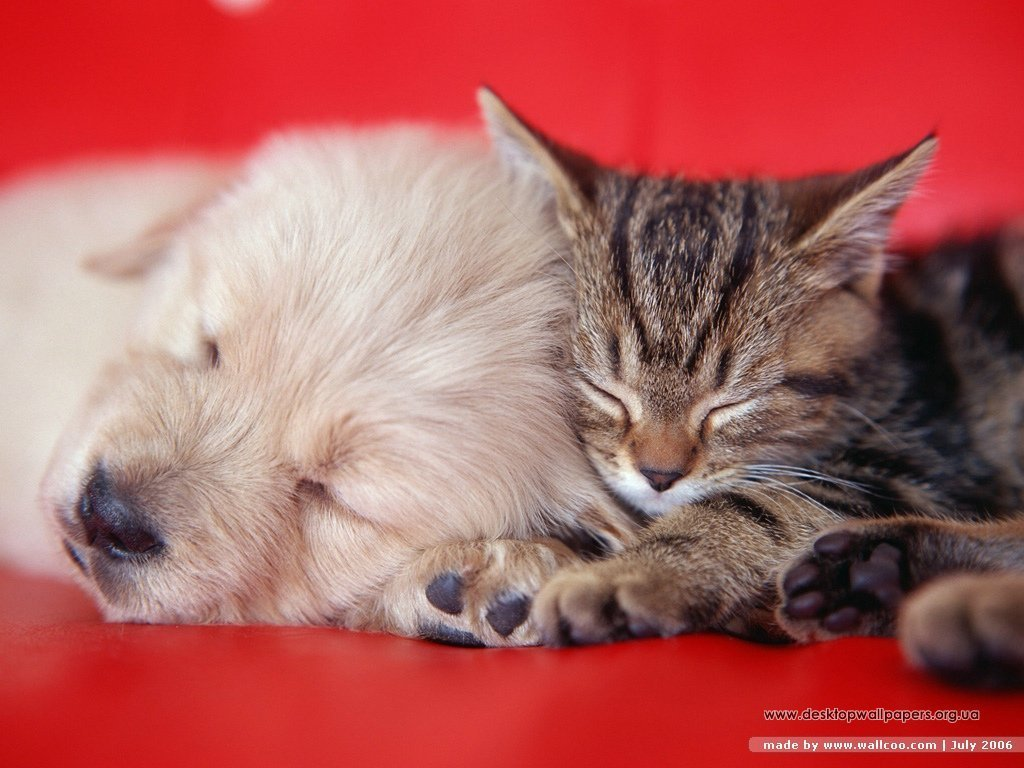 dogs vs. cats images dogs and cats hd wallpaper and background