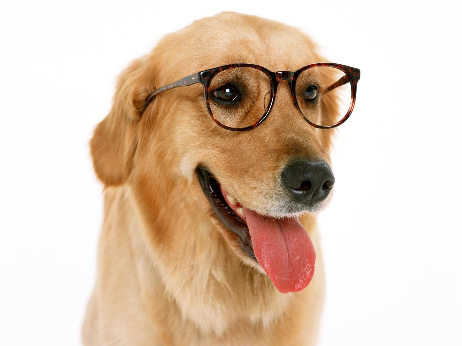 Dogs fun dog wallpaper