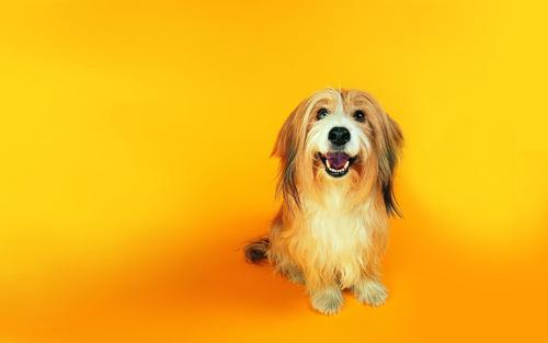 Fun dog wallpaper