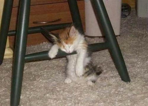 SLEEPING CRITTERS