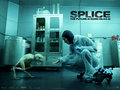 Splice - splice wallpaper