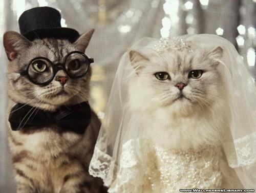 Wedding Кошки !