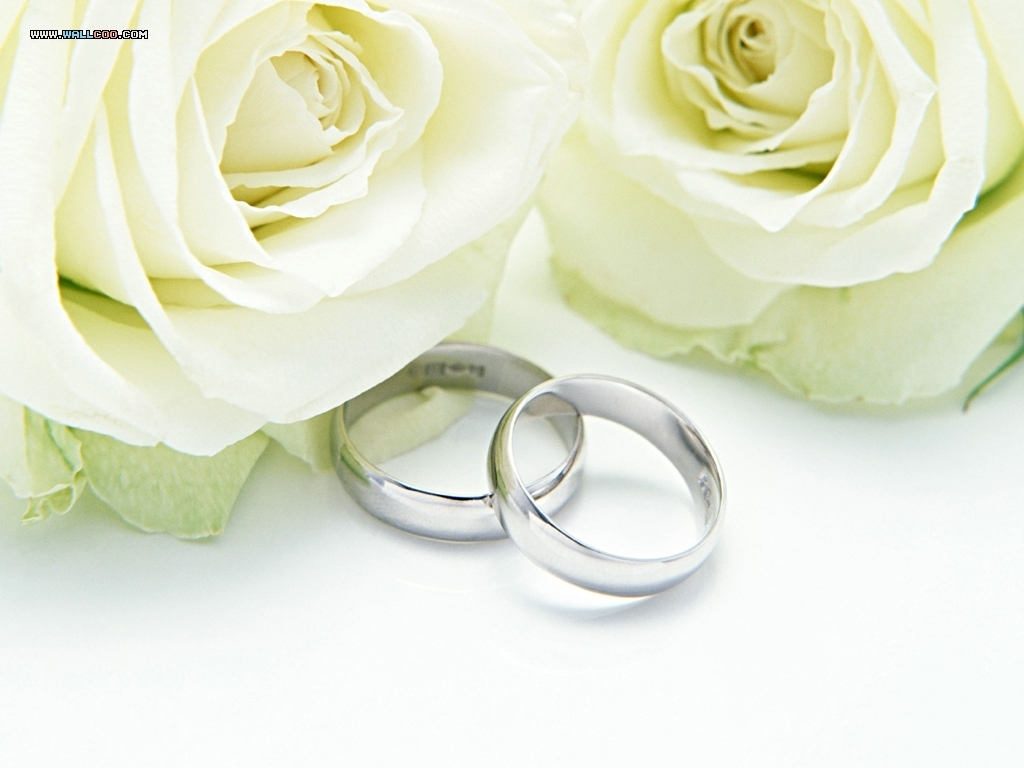 speter images wedding rings and roses hd wallpaper and background