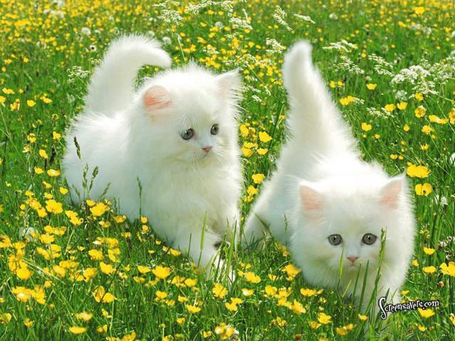 Cats images cute cat wallpaper and background photos