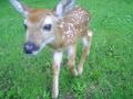 dad's friend's pet deer