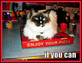enjOY UR pizzA