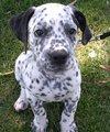it's a puppy!