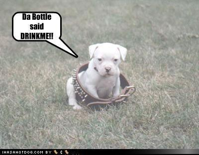 lol..dogs