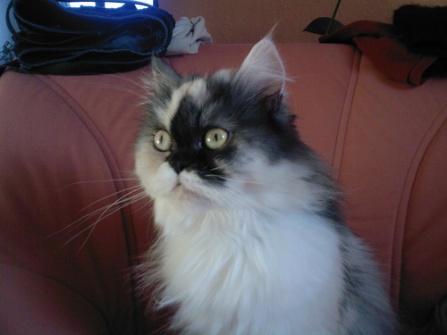 my cat lucy ^^