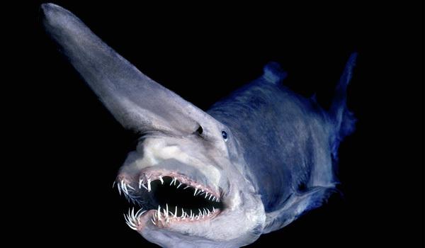 Strange deepsea creatures (photos) - 63.1KB