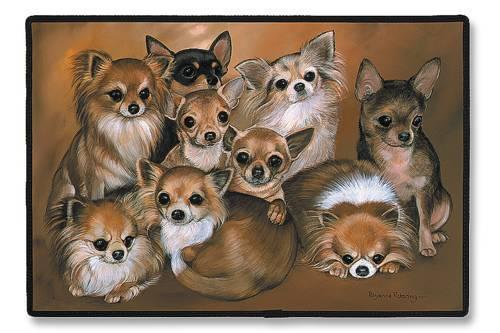 Chihuahuas 壁紙 entitled ♥ Chihuahuas ♥