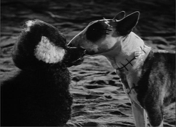 Frankenweenie A Tim Burton Film Halloweencostumes Com Blog