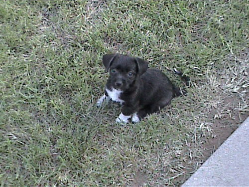 Lucy when she was a puppy