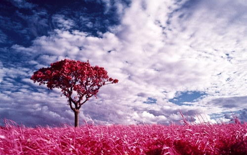 Pink Dreamland - pink-color Wallpaper