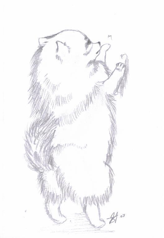 Pomeranian Pomeranians Fan Art