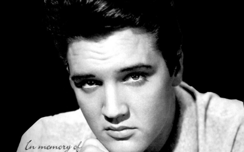 Elvis Presley wallpaper called The King