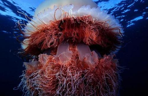 deep sea life achtergrond called creature of the deep