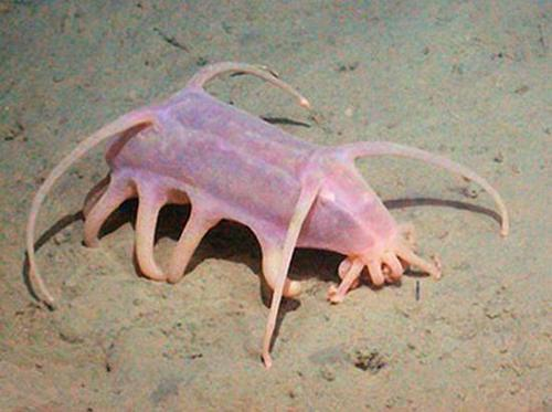 creature of the deep